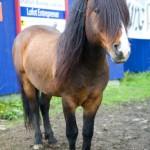 93 Viking's Horse - Present